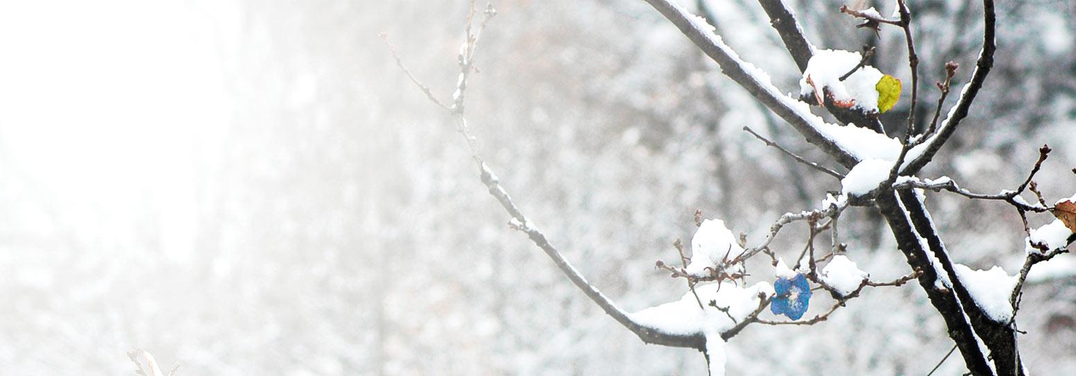 Raquettes à Neige Inook Snowshoes Fabricant De Raquettes à Neige